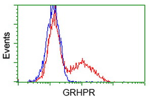 GRHPR / Glyoxylate Reductase Antibody - HEK293T cells transfected with either overexpress plasmid (Red) or empty vector control plasmid (Blue) were immunostained by anti-GRHPR antibody, and then analyzed by flow cytometry.
