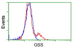 GSS / Glutathione Synthetase Antibody - HEK293T cells transfected with either overexpress plasmid (Red) or empty vector control plasmid (Blue) were immunostained by anti-GSS antibody, and then analyzed by flow cytometry.