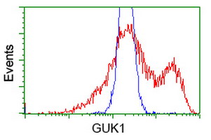 HEK293T cells transfected with either overexpress plasmid (Red) or empty vector control plasmid (Blue) were immunostained by anti-GUK1 antibody, and then analyzed by flow cytometry.