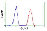 Flow cytometry of HeLa cells, using anti-GUK1 antibody (Red), compared to a nonspecific negative control antibody (Blue).