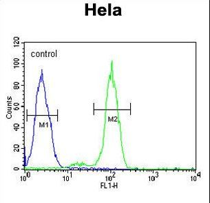 PTPLB Antibody flow cytometry of HeLa cells (right histogram) compared to a negative control cell (left histogram). FITC-conjugated goat-anti-rabbit secondary antibodies were used for the analysis.
