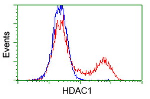 HDAC1 Antibody - HEK293T cells transfected with either overexpress plasmid (Red) or empty vector control plasmid (Blue) were immunostained by anti-HDAC1 antibody, and then analyzed by flow cytometry.