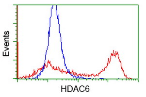 HDAC6 Antibody - HEK293T cells transfected with either overexpress plasmid (Red) or empty vector control plasmid (Blue) were immunostained by anti-HDAC6 antibody, and then analyzed by flow cytometry.