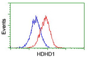 Flow cytometry of HeLa cells, using anti-HDHD1 antibody (Red), compared to a nonspecific negative control antibody (Blue).