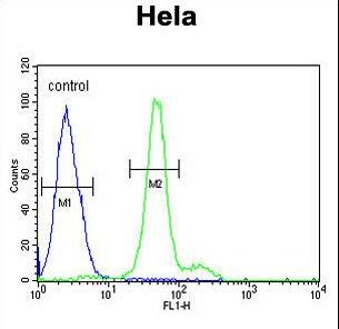HELO1 / ELOVL5 Antibody - ELOVL5 Antibody flow cytometry of HeLa cells (right histogram) compared to a negative control cell (left histogram). FITC-conjugated goat-anti-rabbit secondary antibodies were used for the analysis.