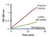 Hexokinase activity in Positive Control and Jurkat cell lysate (40 µg).