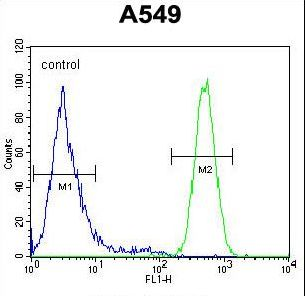 HIF2A / EPAS1 Antibody - EPAS1 Antibody flow cytometry of A549 cells (right histogram) compared to a negative control cell (left histogram). FITC-conjugated goat-anti-rabbit secondary antibodies were used for the analysis.