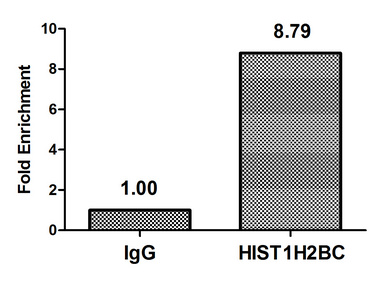 HIST1H2BN Antibody - Chromatin Immunoprecipitation Hela(4*106)were treated with Micrococcal Nuclease, sonicated, and immunoprecipitated with 5ug anti-HIST1H2BC or a control normal rabbit IgG. The resulting ChIP DNA was quantified using real-time PCR with primers against the Beta-Globin promoter.
