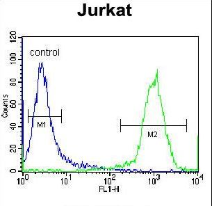 HJURP Antibody - HJURP Antibody flow cytometry of Jurkat cells (right histogram) compared to a negative control cell (left histogram). FITC-conjugated donkey-anti-rabbit secondary antibodies were used for the analysis.