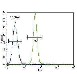 HMOX1 / HO-1 Antibody - HMOX1 Antibody flow cytometry of A549 cells (right histogram) compared to a negative control cell (left histogram). FITC-conjugated goat-anti-rabbit secondary antibodies were used for the analysis.