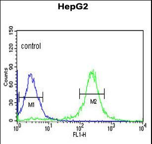 HMX3 Antibody - HMX3 Antibody (Center) flow cytometry of HepG2 cells (right histogram) compared to a negative control cell (left histogram).FITC-conjugated goat-anti-rabbit secondary antibodies were used for the analysis.