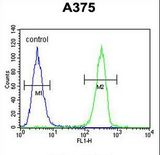HOXA9 Antibody flow cytometry of A375 cells (right histogram) compared to a negative control cell (left histogram). FITC-conjugated goat-anti-rabbit secondary antibodies were used for the analysis.