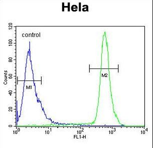 HS3ST2 Antibody flow cytometry of HeLa cells (right histogram) compared to a negative control cell (left histogram). FITC-conjugated goat-anti-rabbit secondary antibodies were used for the analysis.