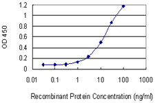 HTR1E / 5-HT1E Receptor Antibody - Detection limit for recombinant GST tagged HTR1E is 0.3 ng/ml as a capture antibody.