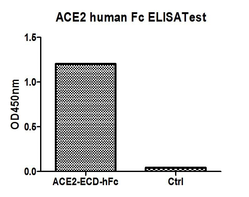ACE2 / ACE-2 Protein