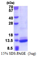 C3orf10 Protein