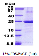 CD32A Protein