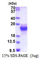 CHAC2 Protein