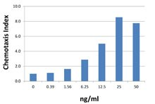 CXCL1 / GRO Alpha Protein - Neutrophils chemoattracted by human CXCL1.