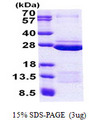 FAM50A Protein