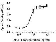 FGF1 / Acidic FGF Protein - NIH3T3 proliferation induced by human FGF-1 in the presence of 10 µg/ml heparin.