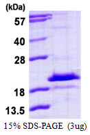 HDDC3 Protein