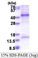 HPR Protein