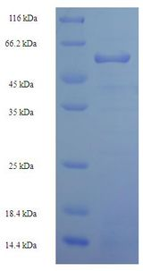 MS / MTR Protein