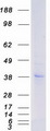 Purified recombinant protein P2RY12 was analyzed by SDS-PAGE gel and Coomassie Blue Staining