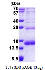 PHF5A / INI Protein