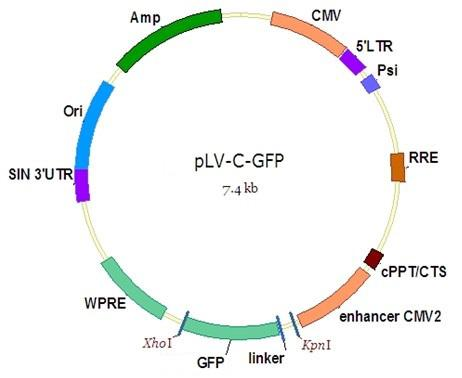 PPP1R18 NucleicAcid