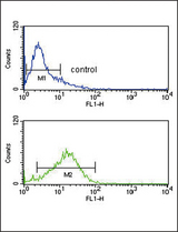 IRF8 Antibody flow cytometry of Jurkat cells (bottom histogram) compared to a negative control cell (top histogram). FITC-conjugated goat-anti-rabbit secondary antibodies were used for the analysis.