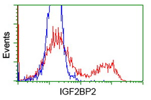 HEK293T cells transfected with either overexpress plasmid (Red) or empty vector control plasmid (Blue) were immunostained by anti-IGF2BP2 antibody, and then analyzed by flow cytometry.