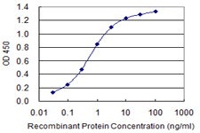 c-Kit / CD117 Antibody - Detection limit for recombinant GST tagged KIT is 0.03 ng/ml as a capture antibody.