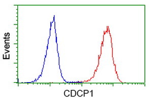 Flow cytometry of Jurkat cells, using anti-CDCP1 antibody (Red), compared to a nonspecific negative control antibody (Blue).