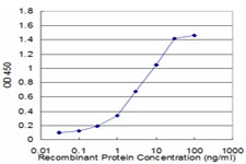CFLAR / FLIP Antibody - Detection limit for recombinant GST tagged CFLAR is approximately 0.3 ng/ml as a capture antibody.