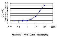 CREB1 / CREB Antibody - Detection limit for recombinant GST tagged CREB1 is approximately 1 ng/ml as a capture antibody.