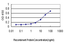 CREG / CREG1 Antibody - Detection limit for recombinant GST tagged CREG1 is approximately 0.3 ng/ml as a capture antibody.