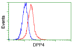 DPP4 / CD26 Antibody - Flow cytometry of HeLa cells, using anti-DPP4 antibody, (Red) compared to a nonspecific negative control antibody (Blue).