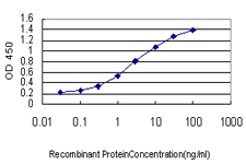 Geminin Antibody - Detection limit for recombinant GST tagged GMNN is approximately 0.03 ng/ml as a capture antibody.