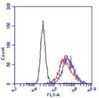 Flow cytometry of PC3 cells with GPR31 antibody. Red: 1:200 dilution, Blue: 1:100 dilution, Black: Negative control.