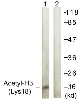 Histone H3 Antibody - Western blot analysis of lysates from HeLa cells, treated with TSA 400nM 24h, using Histone H3 (Acetyl-Lys18) Antibody. The lane on the right is blocked with the synthesized peptide.