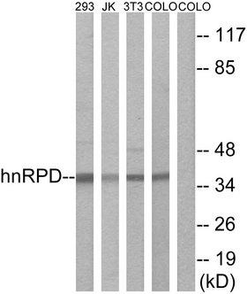 HNRNPD / AUF1 Antibody - Western blot analysis of lysates from 293, Jurkat, 3T3, and COLO205 cells, using hnRPD Antibody. The lane on the right is blocked with the synthesized peptide.