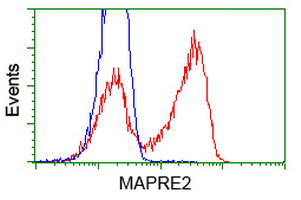 MAPRE2 / EB2 Antibody - HEK293T cells transfected with either overexpress plasmid (Red) or empty vector control plasmid (Blue) were immunostained by anti-MAPRE2 antibody, and then analyzed by flow cytometry.