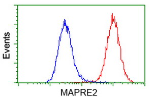 MAPRE2 / EB2 Antibody - Flow cytometry of HeLa cells, using anti-MAPRE2 antibody (Red), compared to a nonspecific negative control antibody (Blue).