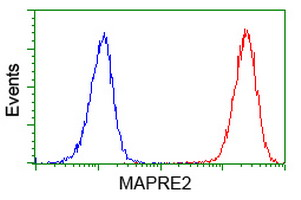MAPRE2 / EB2 Antibody - Flow cytometry of Jurkat cells, using anti-MAPRE2 antibody (Red), compared to a nonspecific negative control antibody (Blue).