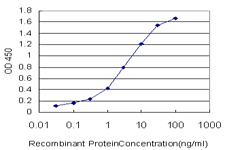 MARCKSL1 Antibody - Detection limit for recombinant GST tagged MARCKSL1 is approximately 0.1 ng/ml as a capture antibody.