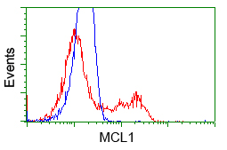 MCL1 / MCL 1 Antibody - HEK293T cells transfected with either pCMV6-ENTRY MCL1 (Red) or empty vector control plasmid (Blue) were immunostained with anti-MCL1 mouse monoclonal, and then analyzed by flow cytometry.