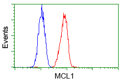 MCL1 / MCL 1 Antibody - Flow cytometry of HeLa cells, using anti-MCL1 antibody, (Red) compared to a nonspecific negative control antibody (Blue).