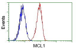MCL1 / MCL 1 Antibody - Flow cytometry of Jurkat cells, using anti-MCL1 antibody, (Red) compared to a nonspecific negative control antibody (Blue).